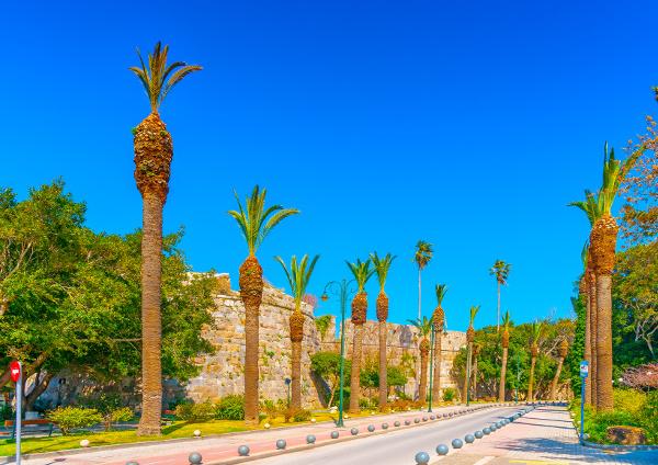 Palmen säumen die Allee unterhalb der Burg Neratzia
