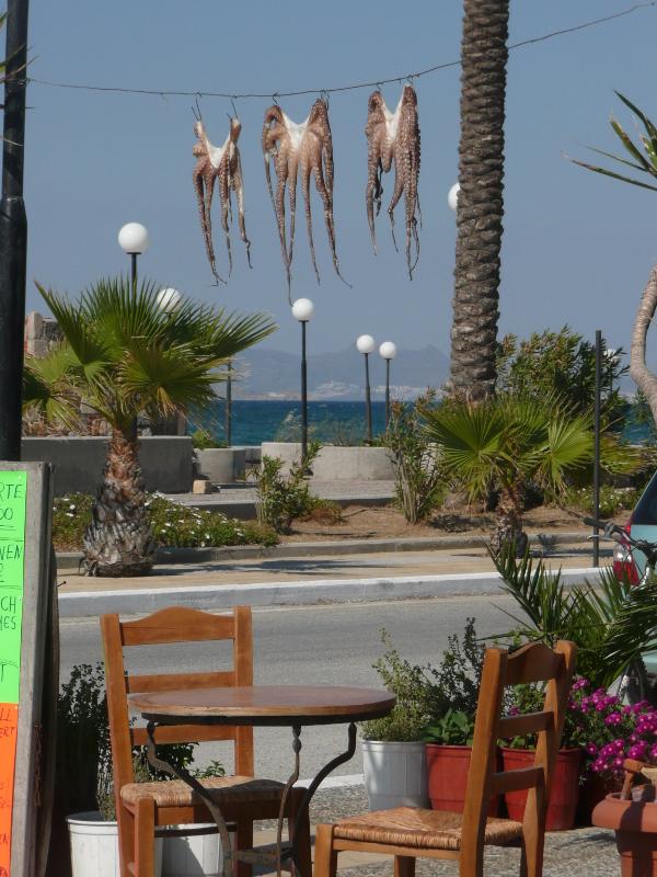 Frischer Oktopus wird im Hafen von Mastichari in der Sonne getrocknet