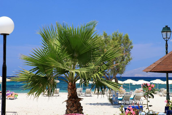 (Kleine) Palme am Mastichari Beach